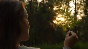 Piscamento de Sun através da folha da samambaia filme