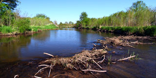 Piscasaw Creek Beaver Dam. Beaver dam in construction on the Piscasaw Creek of northern Illinois Stock Images