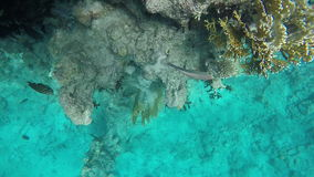 Pisces near in search of food near the Coral reefs stock footage