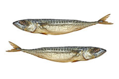 Pisces.Two cold smoked mackerel.Isolated. Royalty Free Stock Photo