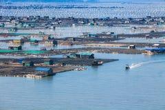 Piscicoltura dei frutti di mare, industria della pesca sul mare, Fujiang, Cina Fotografia Stock
