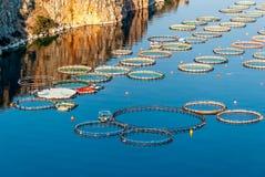 Pisciculture en Grèce photographie stock