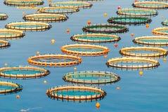 Pisciculture en mer de Myrtoan image libre de droits