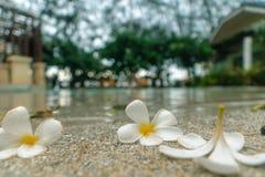 Piscina con la flor de la caída Fotografía de archivo libre de regalías