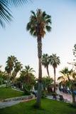 Piscina con las palmeras y los paraguas fotos de archivo