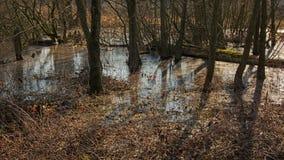 Piscina congelada en el piso del bosque Fotos de archivo libres de regalías