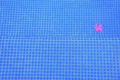 Piscina cor-de-rosa da flor Fotos de Stock
