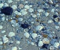 Piscina de la marea de la Costa del Golfo de Mississippi fotografía de archivo libre de regalías