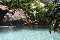 Piscina de la roca con los arbustos Foto de archivo