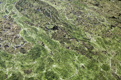 Piscina de las algas Foto de archivo