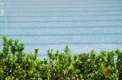 Piscina de las plantas verdes y del color de la turquesa Fotografía de archivo libre de regalías