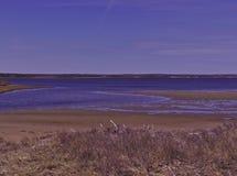 Piscina de marea 3503 fotografía de archivo libre de regalías