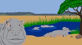 Piscina del hipopótamo Imágenes de archivo libres de regalías