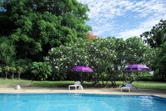 Piscina en jardín tropical en día soleado imagen de archivo libre de regalías