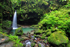 Piscina esmeralda, Dominica Fotos de archivo libres de regalías