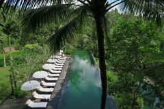 piscina in giungla Immagine Stock Libera da Diritti
