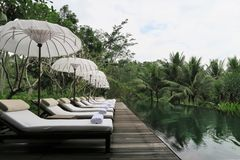 piscina in giungla Fotografia Stock Libera da Diritti