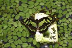 Piscina para las mariposas Imágenes de archivo libres de regalías