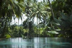 Piscina tropical Fotos de archivo libres de regalías
