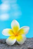 Piscina tropical de la flor y del frangipani fotos de archivo