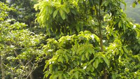 Piscina tropical en selva almacen de metraje de vídeo