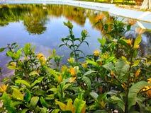 Piscina y planta hermosas del lugar foto de archivo libre de regalías