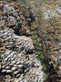 Piscinas de la marea Imagen de archivo libre de regalías