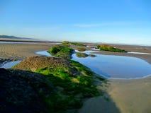 Piscinas de la marea Fotos de archivo