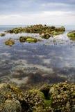 Piscinas de la roca con agua del tiempo-lapso Foto de archivo