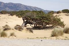 Piscinas, dune landscape, Sardinia, Italy Royalty Free Stock Image