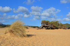 Piscinaswoestijn en boom, Italië royalty-vrije stock foto's