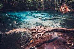 Piscine bleue de Sra Morakot à la province de Krabi, Thaïlande Images libres de droits