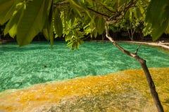 Piscine d'émeraude de parc national LA THAÏLANDE KRABI Photographie stock