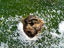 Piscine d'eau en parc avec une tortue photo stock