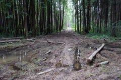 Piscine dans la forêt Images libres de droits