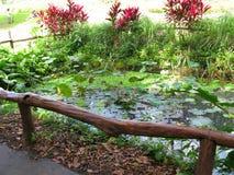 Piscine de canal, La Mesa Ecopark, Quezon City, Philippines photo stock