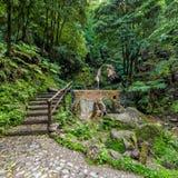 Piscine de Chaud-ressort dans la forêt tropicale Photos libres de droits