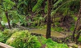Piscine de Chaud-ressort dans la forêt tropicale Image stock