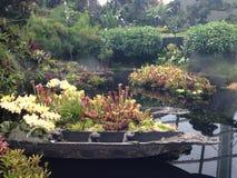Piscine de jardin avec des fleurs à Singapour Photo libre de droits