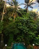 Piscine de jungle photo stock