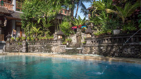 Piscine de jungle Photo stock