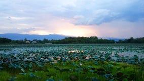 Piscine de Lotus Image stock