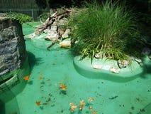 Piscine de loutre dans le jardin zoologique de Zagreb photos libres de droits