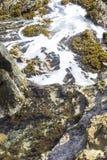 Piscine de marée Aruba image libre de droits