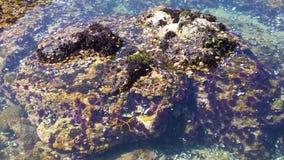Piscine de marée de Big Sur images stock