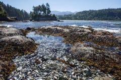 Piscine de marée sur la péninsule olympique 2 Photos stock