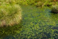 Piscine de marais Photos libres de droits