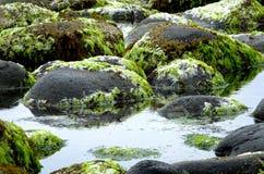 Piscine de roche Photographie stock libre de droits