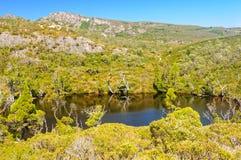 Piscine de wombat - montagne de berceau image stock