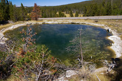 Piscine en cuir en parc national de Yellowstone Photos stock